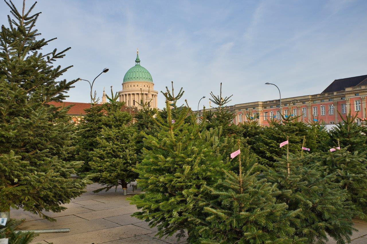 Mit Sicherheits- und Hygienekonzepten bleibt der Weihnachtsbaumverkauf weiterhin zulässig.