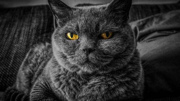 Stars auf 4 Pfoten - berühmte Katzen