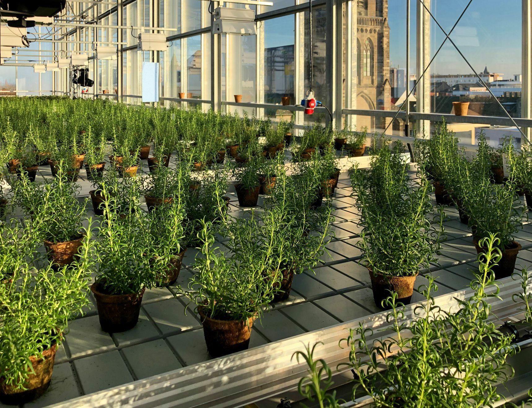 Indoor-Farming in Oberhausen